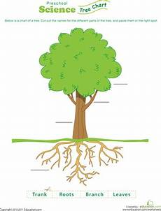test your tree knowledge worksheet education com