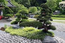 baum kleiner garten bonsai baum im zen garten gestaltungsideen