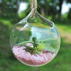 plante suspendue verre plantes du jardin jardin et patio