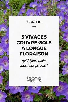 5 Vivaces Couvre Sols 224 Longue Floraison Qu Il Faut Avoir