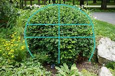 The Impatient Gardener How To Prune A Meatball Boxwood