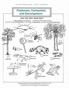 plants as producers worksheets 13617 17 best images about angol biosz on food webs food chains and ecological pyramid