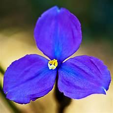 iris fiore immagini bush iris il fiore ti rida la carica in ferie la