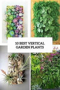 To Plant Vertical Garden by 10 Best Vertical Garden Plants Cover Gardenoholic