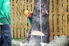 couper un arbre 12261 pin on arboplus