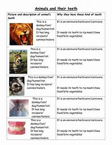 animal teeth worksheets 14367 animals and teeth lower attainers by jpspooner teaching resources tes