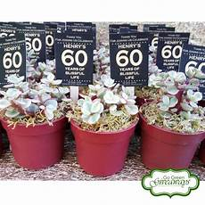 succulents giveaways for henry s 60th birthday bacolod philippines 60th birthday giveaway