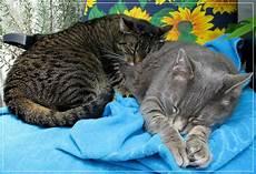 gute nacht freunde foto bild tiere haustiere katzen
