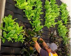 To Plant Vertical Garden by Vertical Garden Plants Interior Winduprocketapps