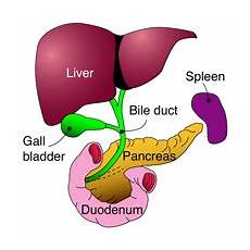 gallbladder diagram gallstones hpblondon