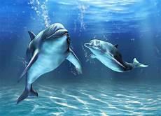 Gambar Ikan Lumba Lumba Di Laut Terbaru Gambarcoloring