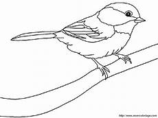 Malvorlage Vogel Spatz Ausmalbild Spatz Kostenlos