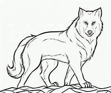 kostenlose malvorlagen wolf wolf ausmalbild kinderbilder kinderbilder