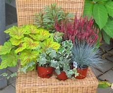 Balkonpflanzen Set F 252 R Balkonkasten 60 Cm Lang Pflanzen