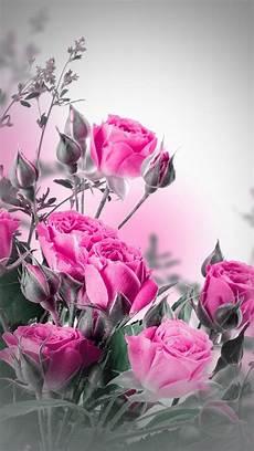 Beautiful Flower Wallpaper Zedge by Pin By Suhail Alali On I Suhail Al Iraqi Wallpaper