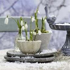 was sie f 252 r ihre pflanzen und ihren garten im winter tun