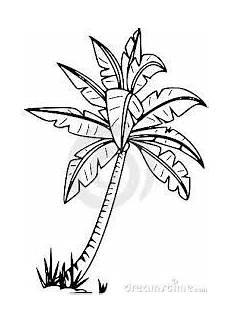 palma llanera para dibujar palmera silueta google search palmeras p 225 ginas para colorear palma de coco