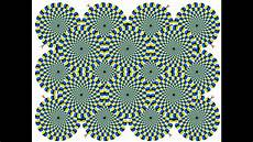 optical illusions science fair