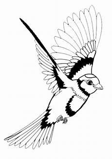 Ausmalbilder Erwachsene Vogel Vogel Malvorlagen Vogel Malvorlagen Kostenlos Druckbare