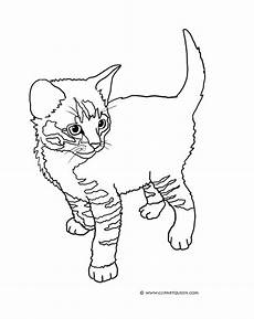 tabby cat coloring pages at getcolorings free
