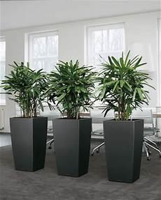 Intira Design Using Indoor Plants Tastefully