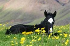 welche pferderasse passt zu mir welche pferderasse passt zu dir