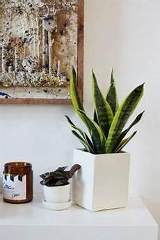 große pflanzen fürs wohnzimmer die 196 besten bilder wohnzimmer pflanzen in 2019 bedroom decor diy ideas for home und