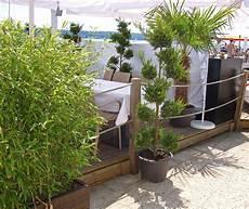 Welche Pflanzen Als Sichtschutz - bambus als sichtschutz f 252 r terrasse und balkon bambus