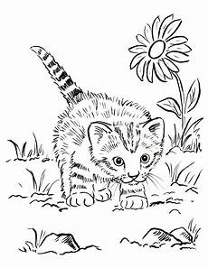 kitten coloring page starts