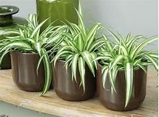 Plante D 233 Toxifiante D Int 233 Rieur Fleuriste Bulldo