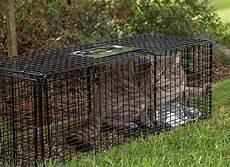 pi 232 ges 224 chats du moment les meilleurs prix 2019 en un