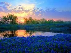 paesaggi fioriti paesaggio fiorito immagini e foto gratuite