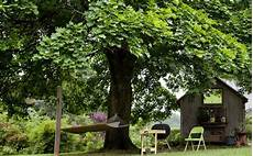 Shades 7 Fast Growing Shade Trees To Slash Your