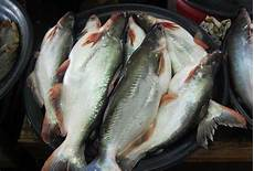 Dialog Rakyat Penternak Dakwa Industri Ikan Patin