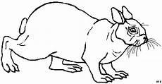 ausmalbild hase klein hase kleine ohren ausmalbild malvorlage tiere