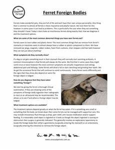 ferret care sheets the unusual pet vets