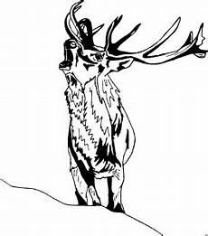 Kostenlose Malvorlagen Hirsch Hirsch Roehrt Ausmalbild Malvorlage Tiere