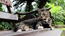 Diese Katze Kommt Zur 252 Ck Nach Hause Und Bringt Einen Ganz