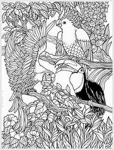 ausmalbilder urwald tiere zeichnen und f 228 rben