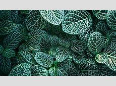Leaves Close Up Texture Wallpaper   Mobile & Desktop