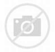 Albatross, galapagos