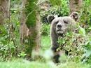 Bildergebnis für bärenpark rippoldsau