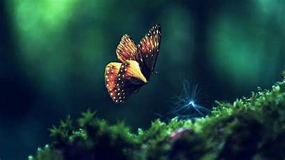 Wallpapers Laptop Backgrounds Pc Butterfly Nature Background
