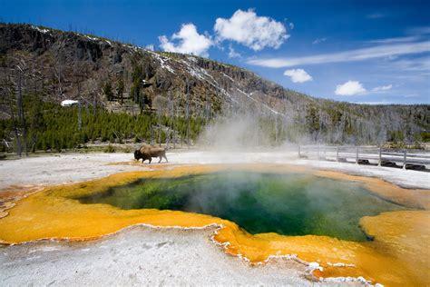 visit yellowstone national park   lifetime