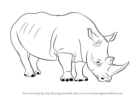 learn   draw  rhinoceros zoo animals step  step