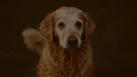 koestler hundezentrum fuer glueckliche hunde und ihre halter