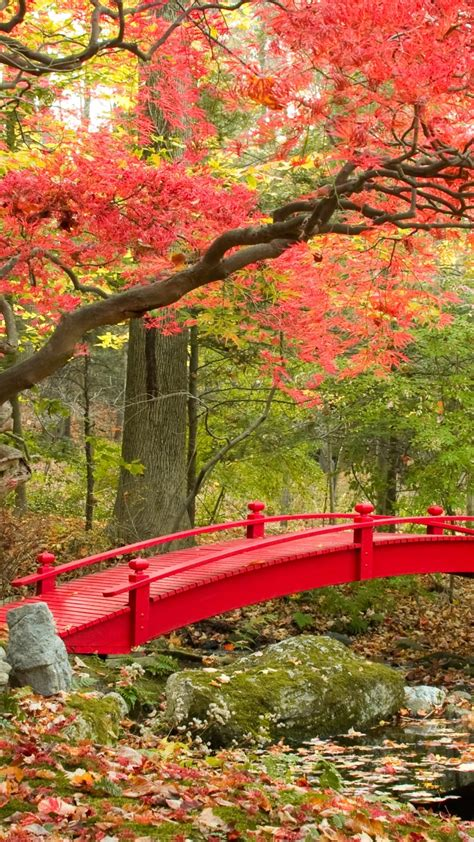 wallpaper autumn maple trees japanese garden  nature