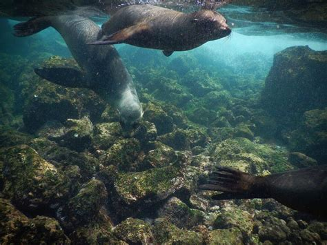 Isabela Island: a Land-Based trip to the The Galapagos ...