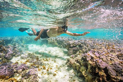 hanauma bay snorkel adventures affordable tours