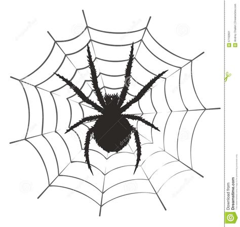 spider web drawing with spider spider web drawing pencil drawing